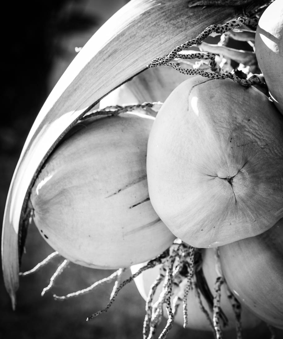 Supple Nectar (b/w) <h5>Metal Print</h5> <h5>$300 - $1200</h5> <h5>click for more details</h5>