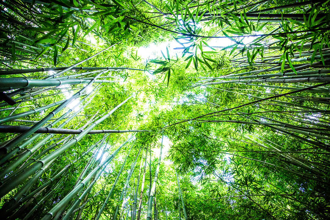 Bamboo Sky <h5>Metal Print</h5> <h5>$150 - $1,000</h5> <h5>click for more details</h5>