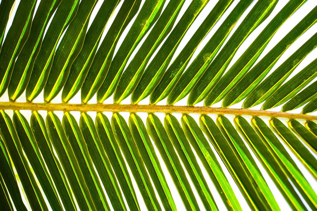 Palm Leaf <h5>Metal Print</h5> <h5>$150 - $1,000</h5> <h5>click for more details</h5>