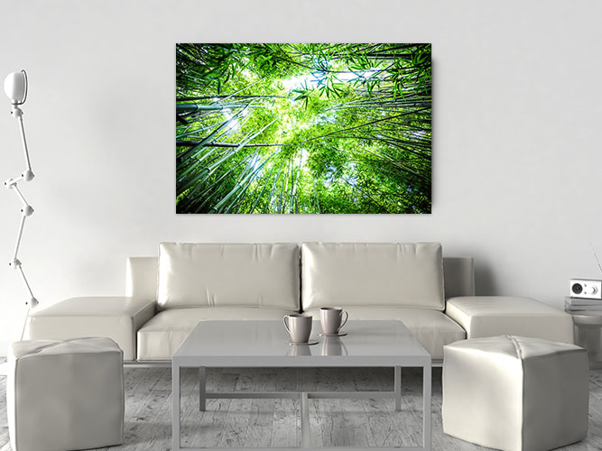 Chelsea-Heller-Photography-Fine-Art-Bamboo-Sky-Demo