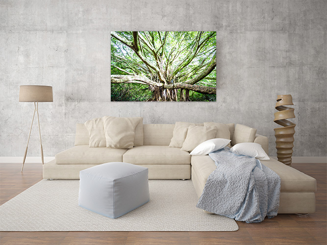 Chelsea-Heller-Photography-Fine-Art-Banyan-Bliss-Demo-1