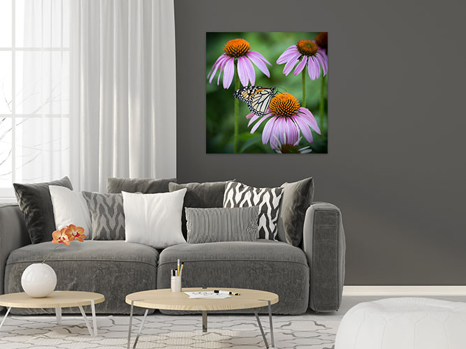 Chelsea-Heller-Photography-Fine-Art-Echinacea-Demo-2