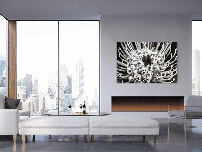Chelsea-Heller-Photography-Fine-Art-Leucospermum-Demo-2