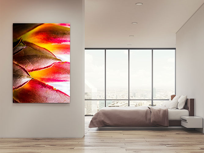 Chelsea-Heller-Photography-Fine-Art-Protea-Sunset-Demo